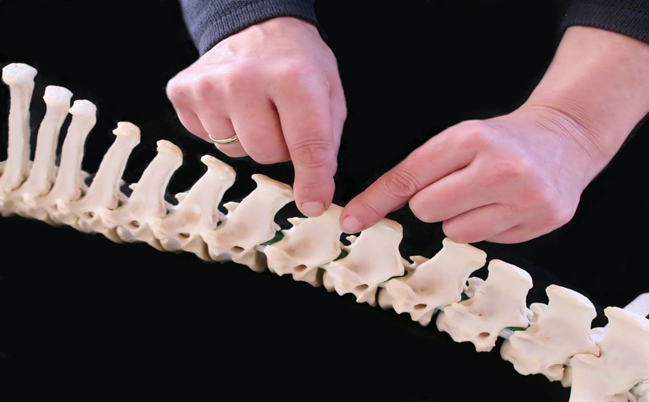 Europäisches Institut für energetische Osteopathie nach Salomon